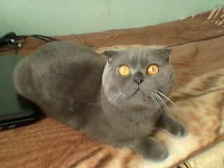 Кот в белгороде для вязки