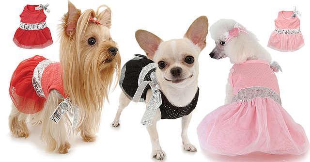 Одежда для собак бизнес